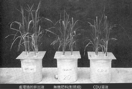 將加以淨化處理後的糞尿當做有機肥料時之效果